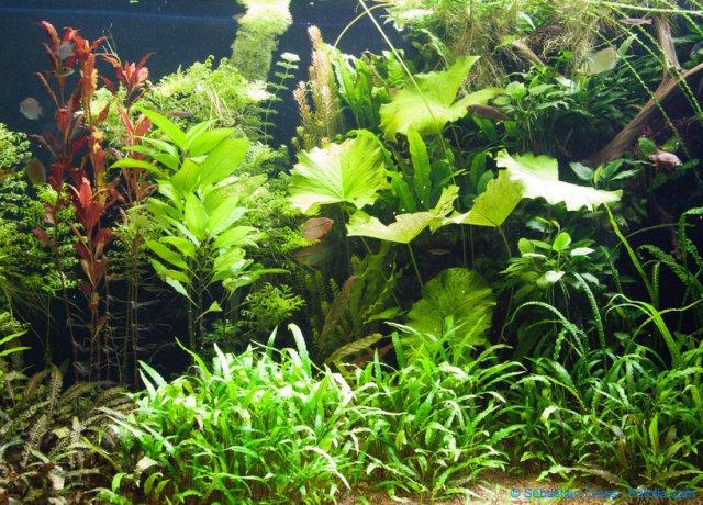 Pflanzen für Fische